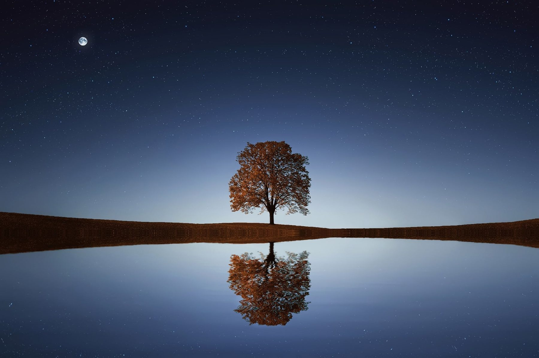 tree with reflection in water