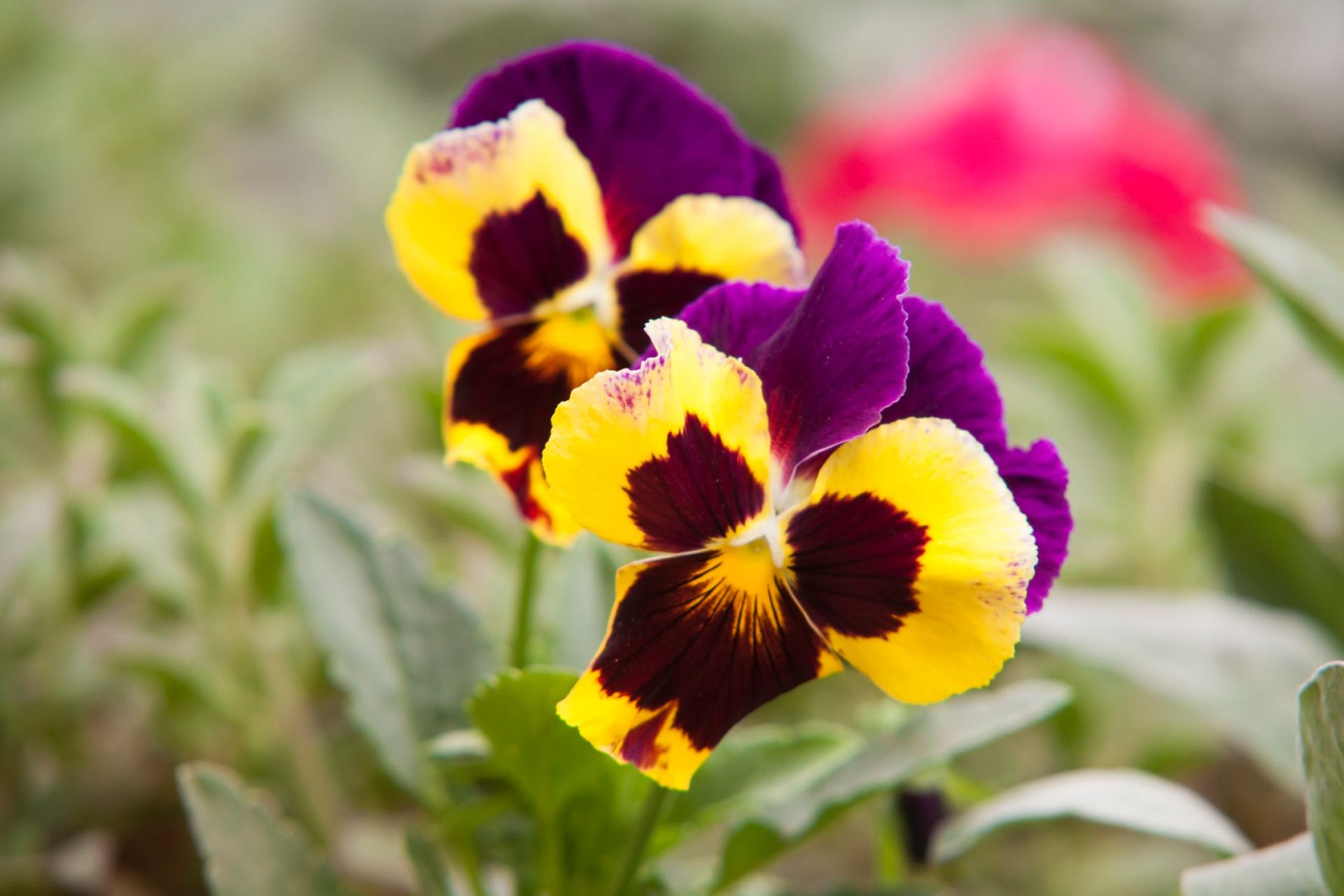 Some of the best flowers to plant this Spring